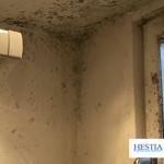 condentation humidité plafond