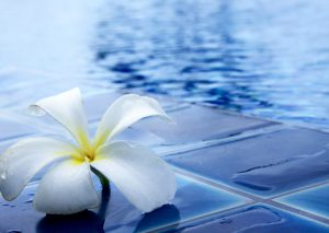 fleur blanche bord de piscine